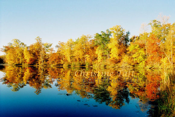 Autumn Foliage reflected in a deep blue lake