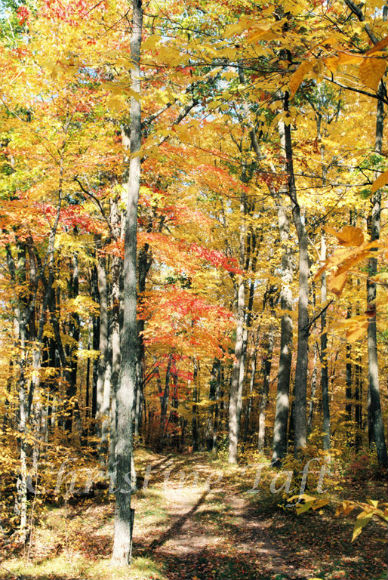Beautiful fall colors in a wooded area of Wisconsin