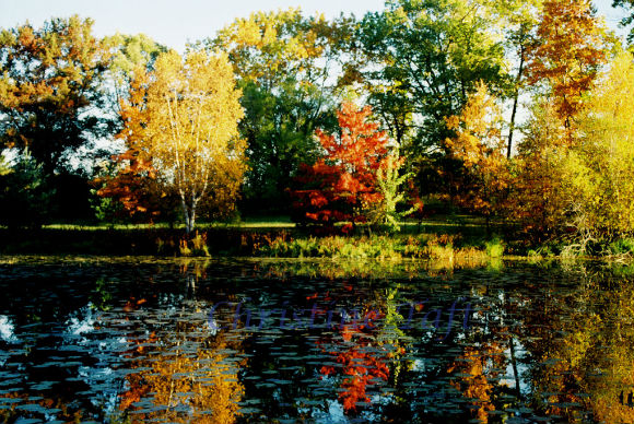Photograph of autum foliage reflected in a lake in northern Wisconsin