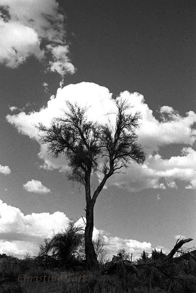 Black and white photograph of a lone tree standing against a billowy cloud