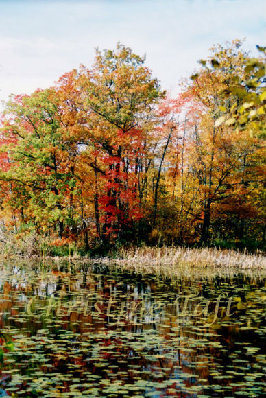 Photo of autumn foliage and pond in Wisconsin