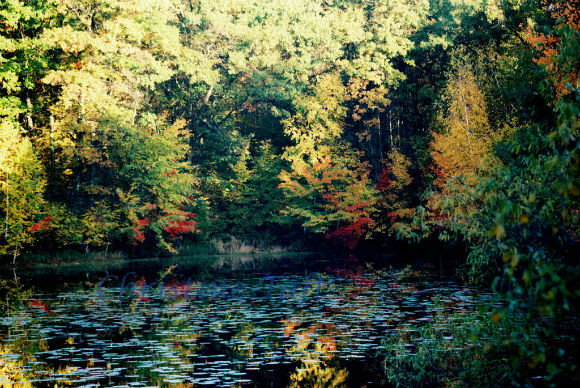 Photograph of pond with colorful autumn trees