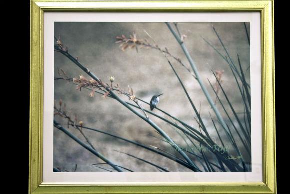 Hummingbird on Yucca plant