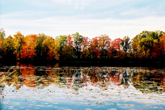 Photograph of the colorful autumn trees against a lake