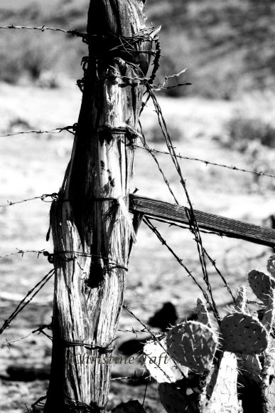 Black and white photo of an old wooden fence post with barbed wire